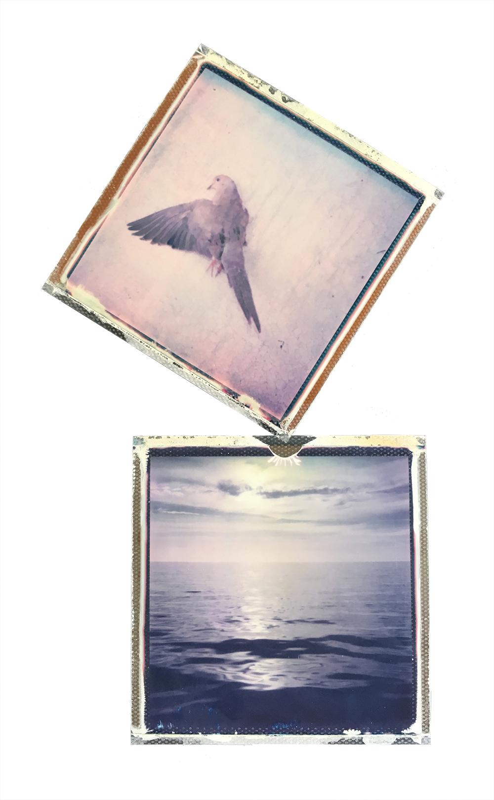 emma j starr analogue photography polaroid collage key west 1.jpg
