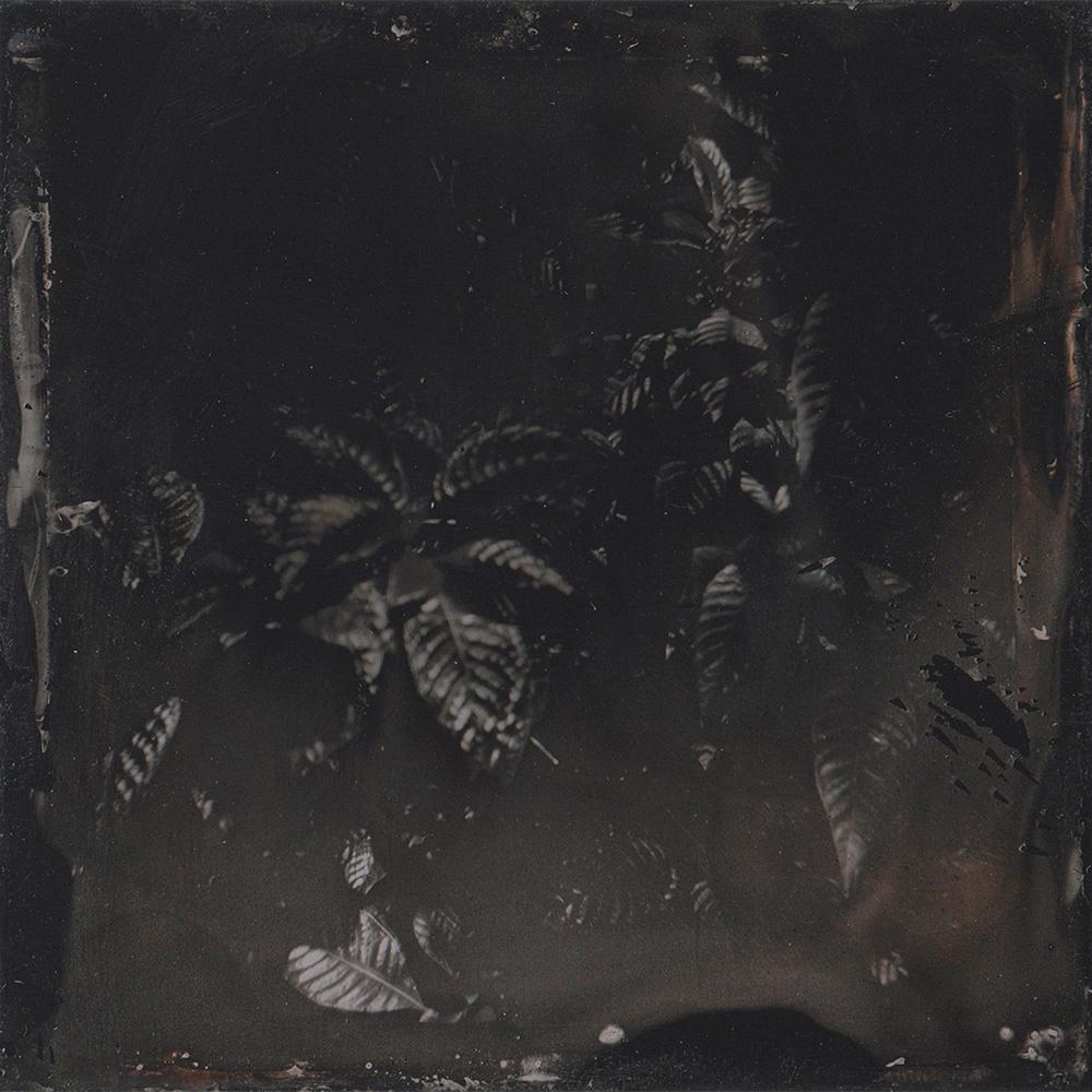 wet plate collodion emma j starr key west.jpg