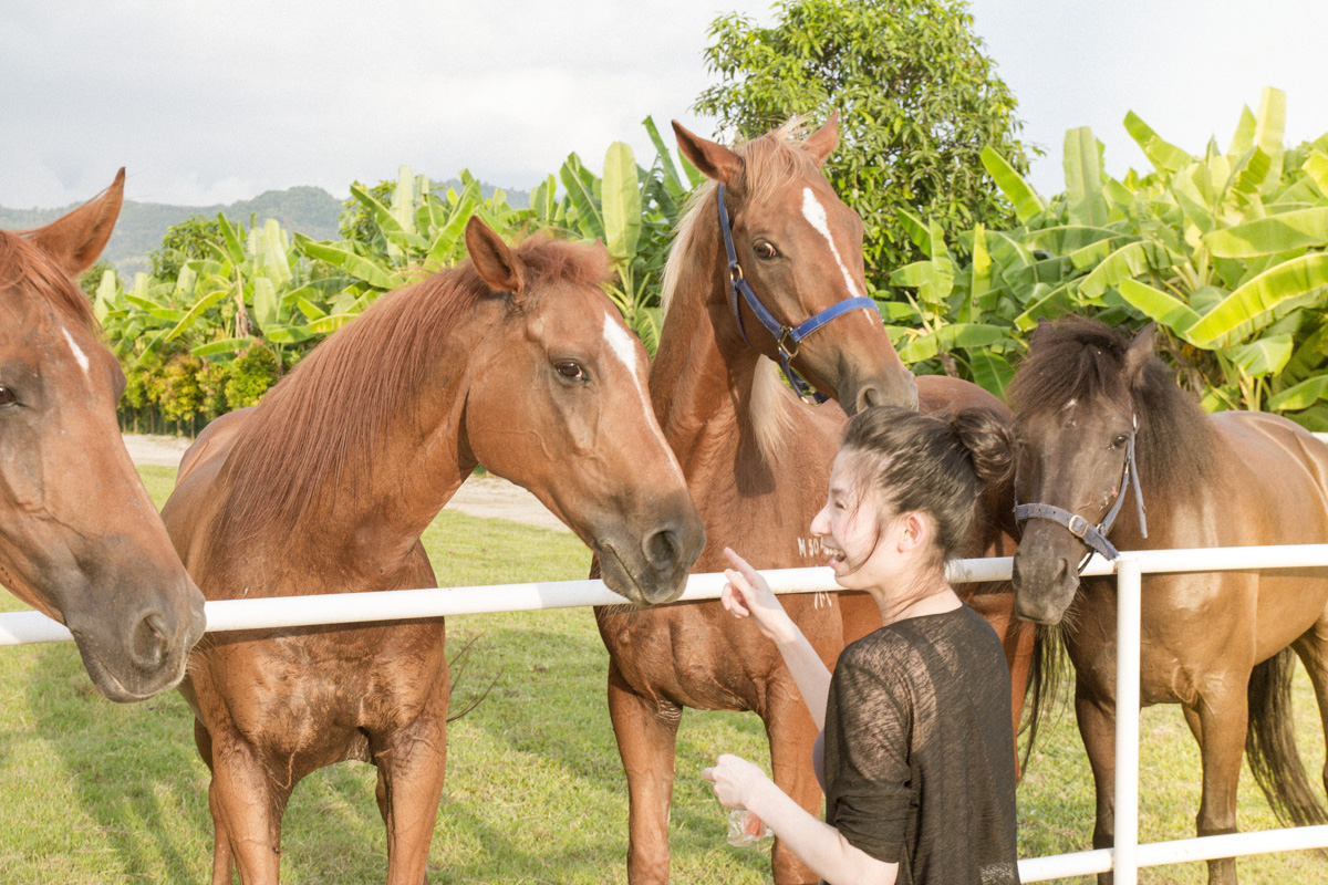 countryside-stables-penang-16