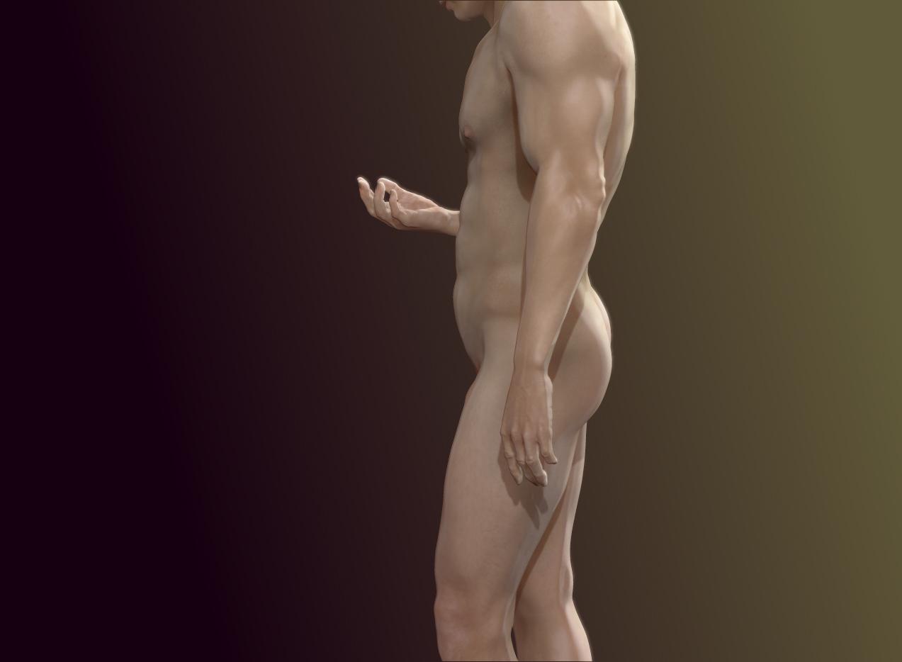 Standard man - Anatomy Studies: Athletic Human Male