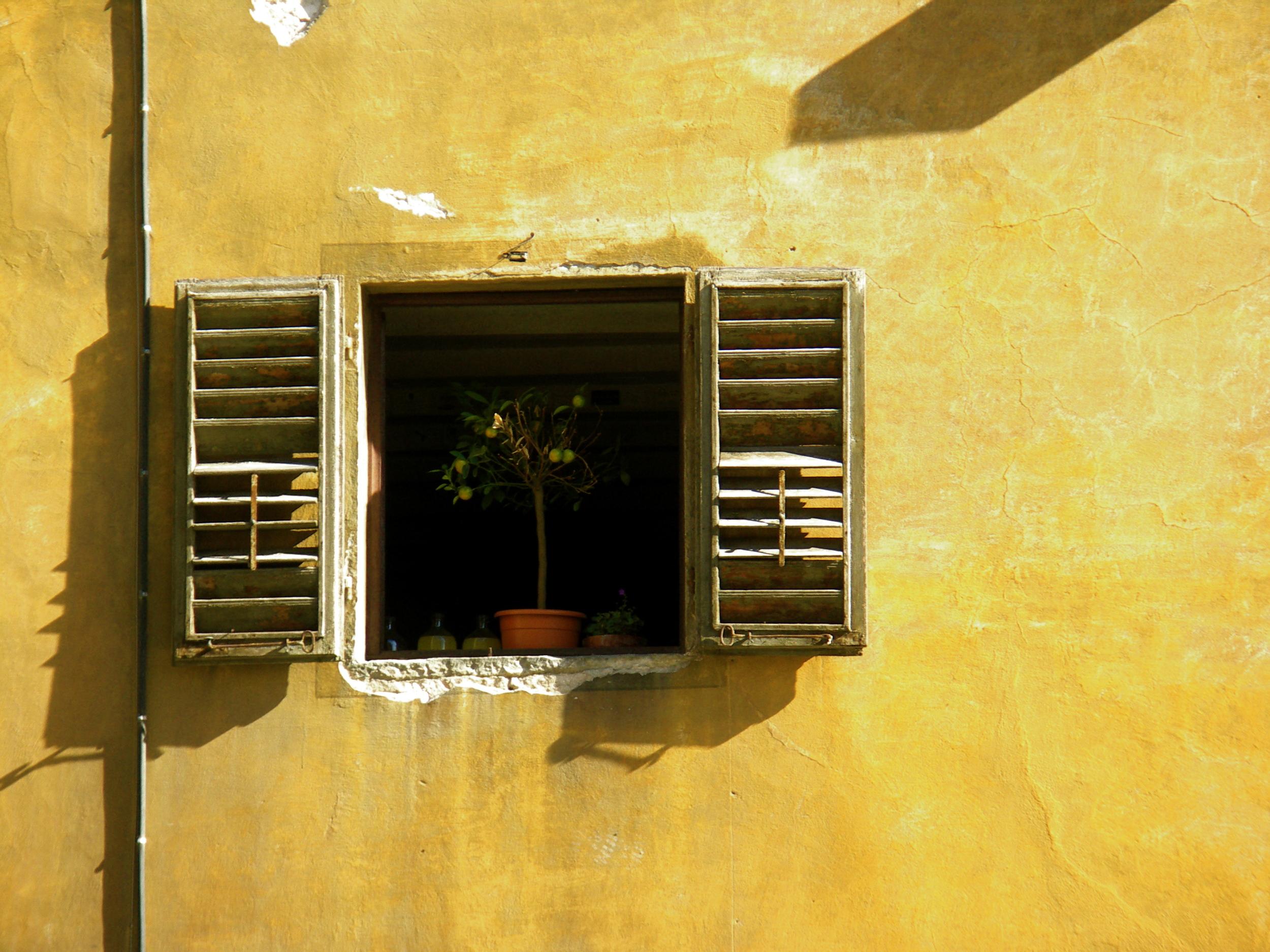 lime tree in window.jpg