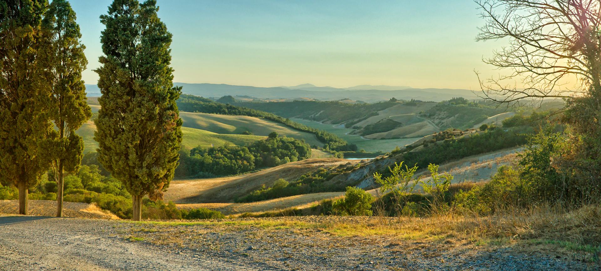trees in landscape.jpg