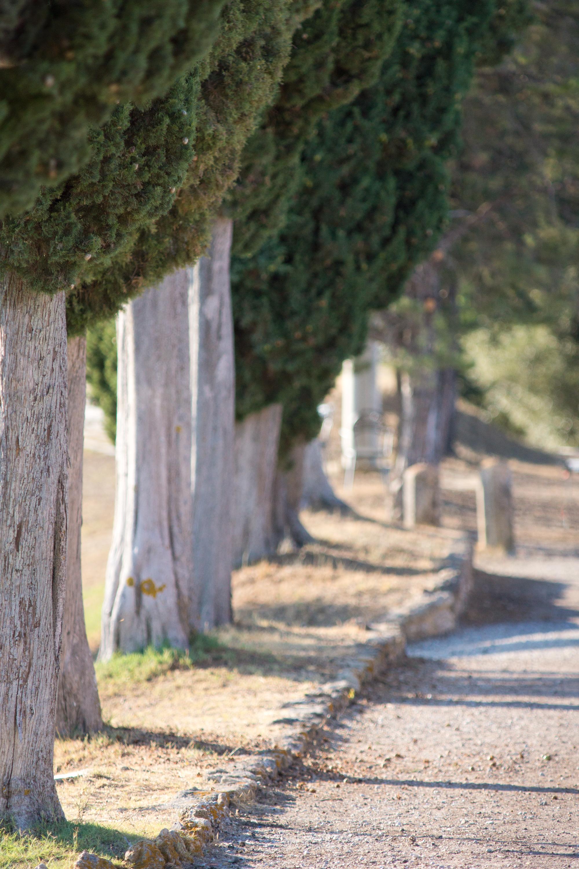 trees on road.jpg