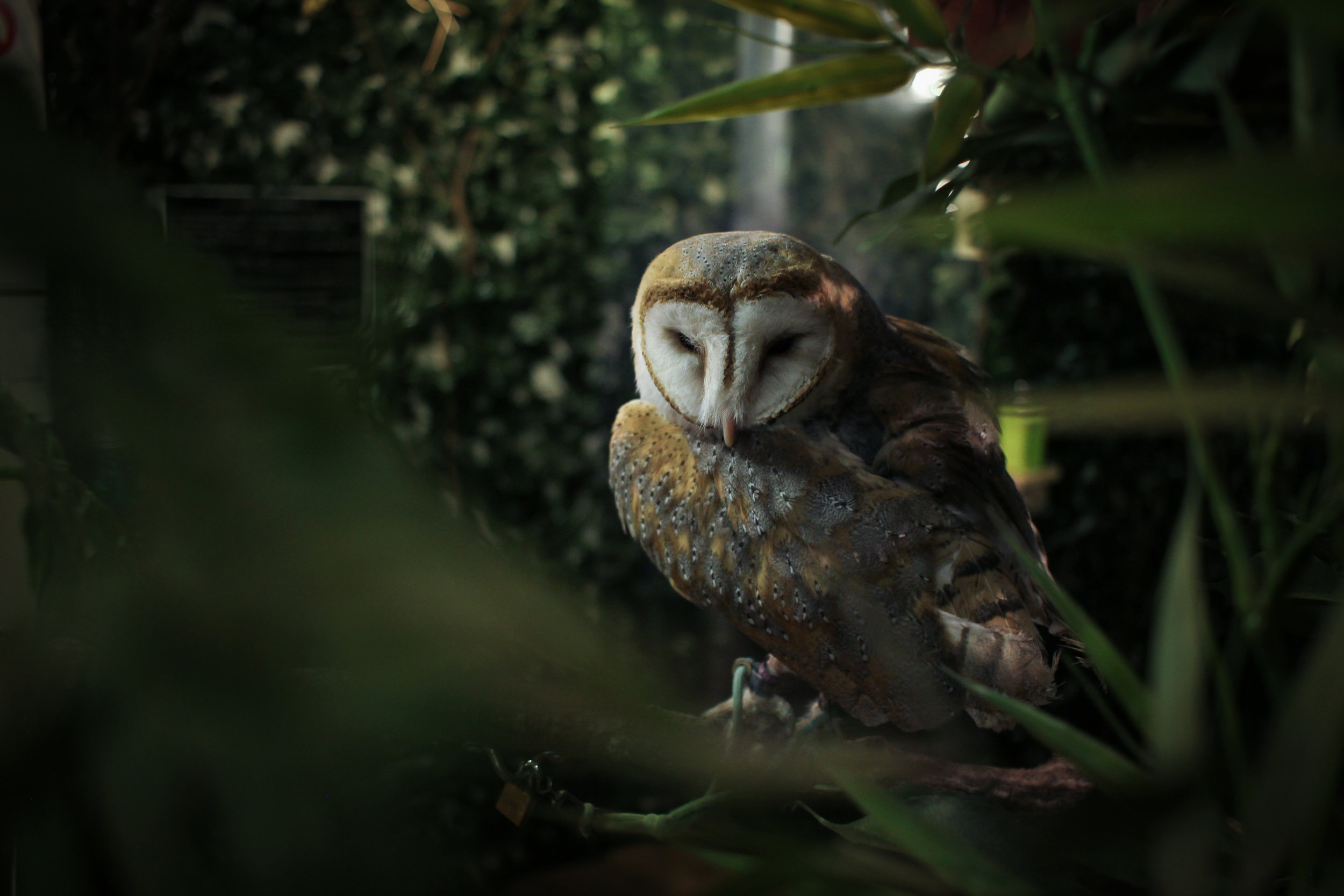 Owl Cafe, Kyoto