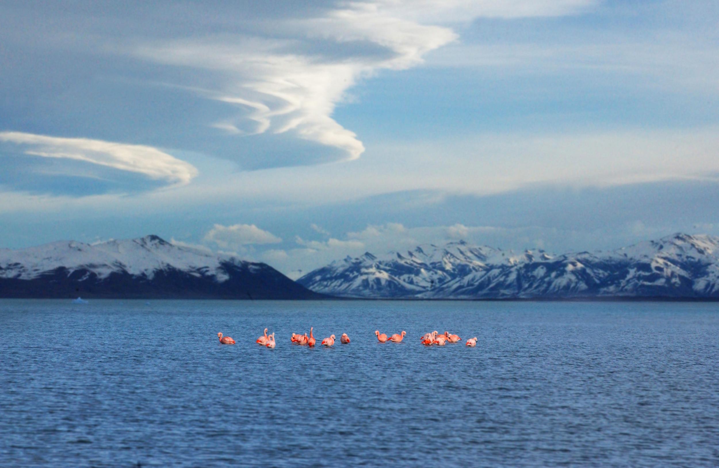 Flamingos, Lago Moreno, Patagonia