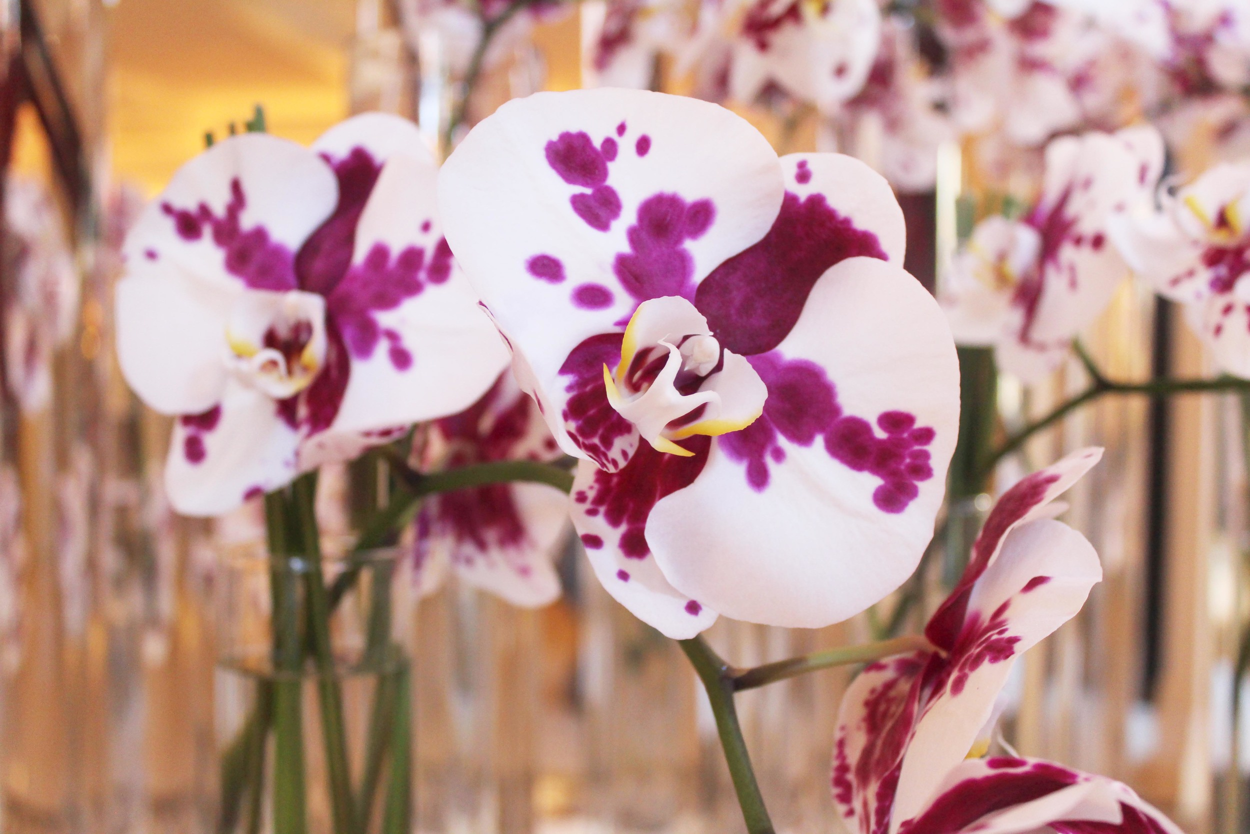 orchid.jpg