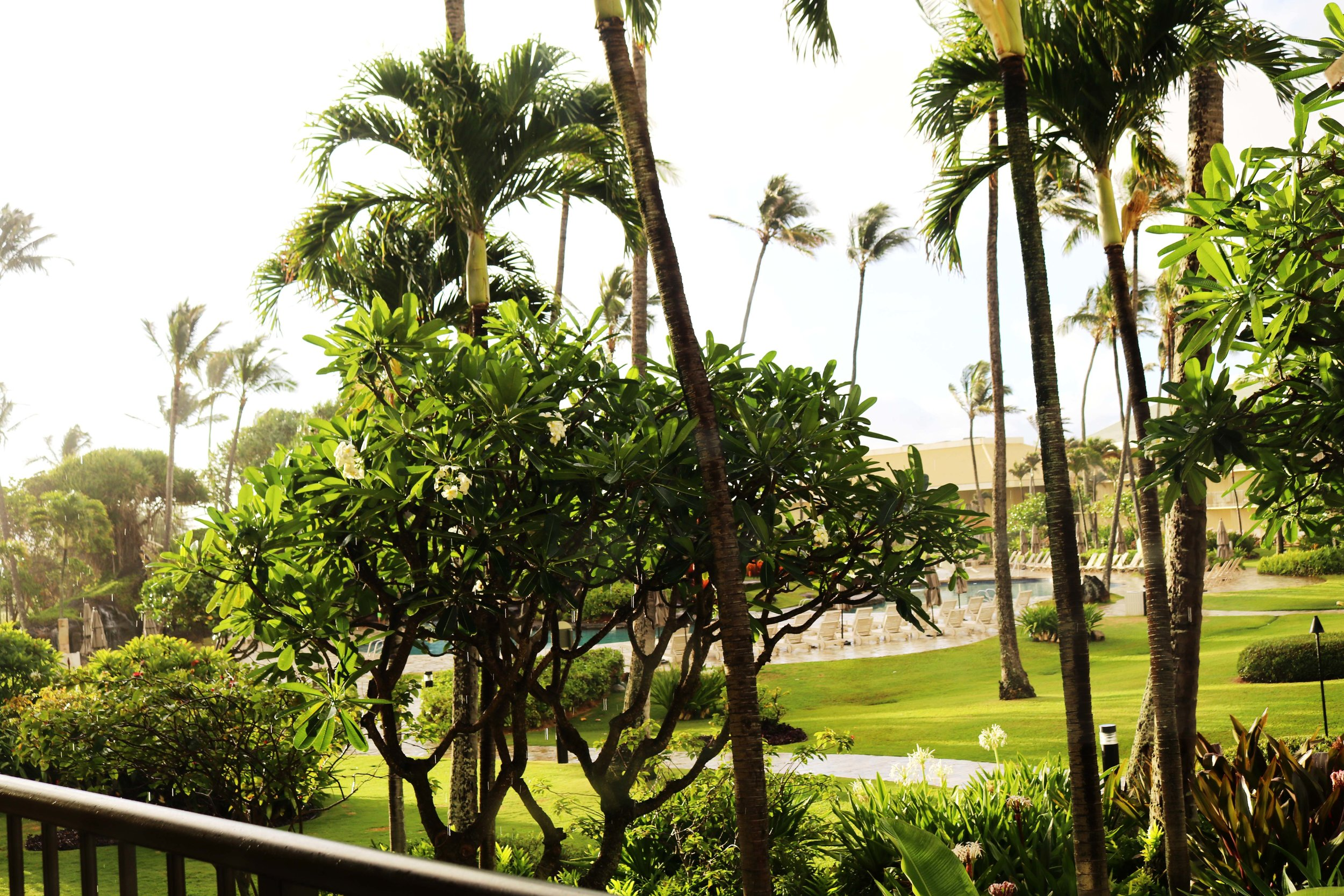 These beautiful tropical trees and plants were kind of in the way of my pool, but I was totally okay with that. Watching the morning sun peer through or unexpected rain showers was one of my favorite parts.. *heart eyes*
