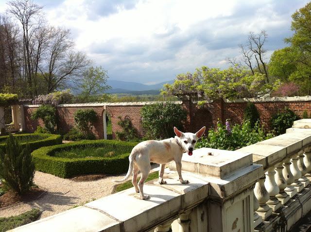 Stevie at Blythewood Estate, Bard College