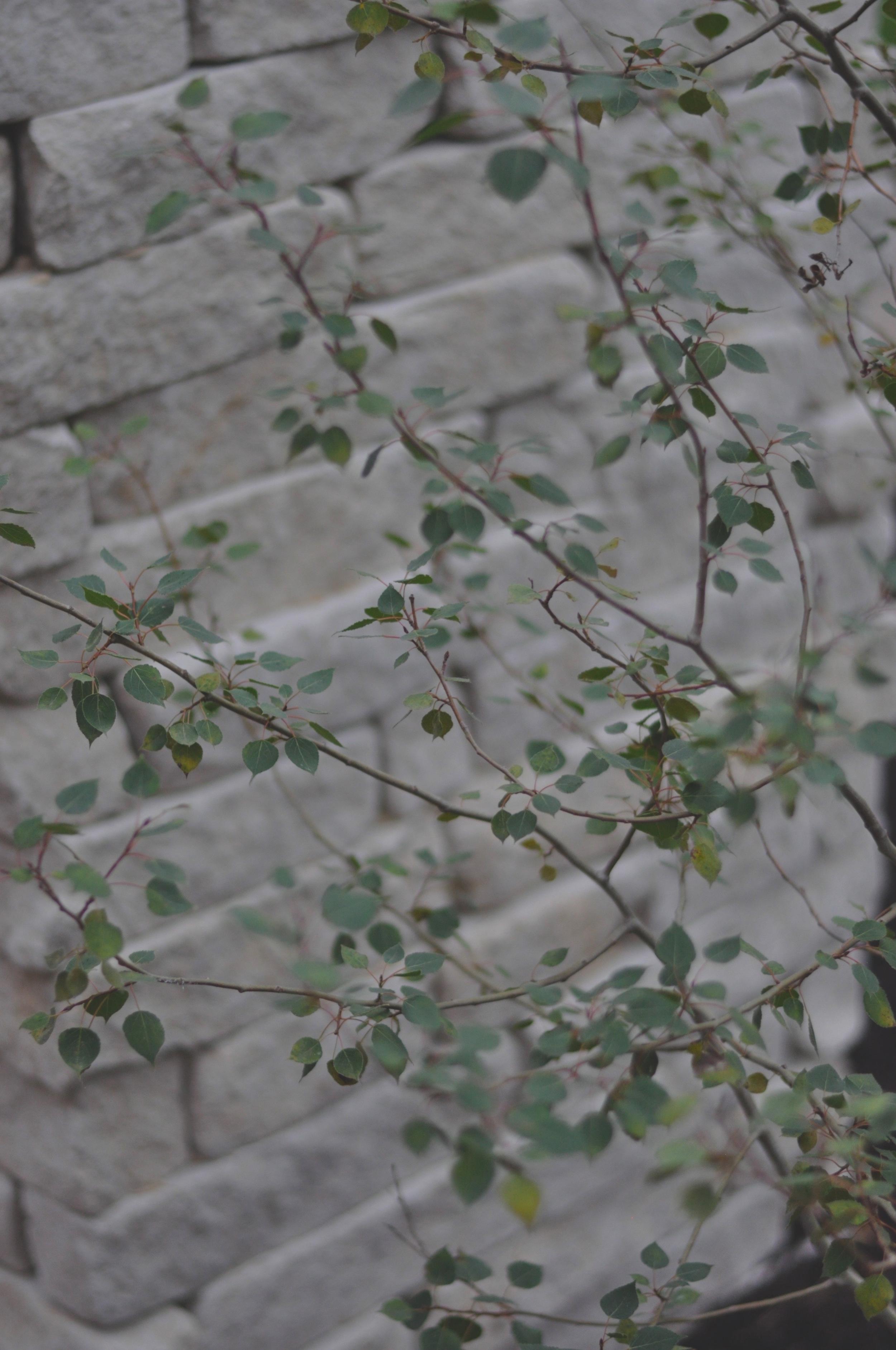 aspen limestone.jpg
