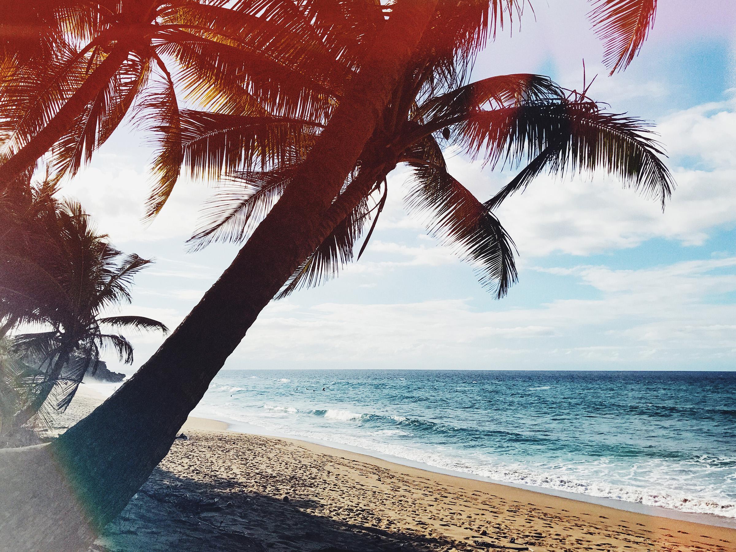 beachpalmu