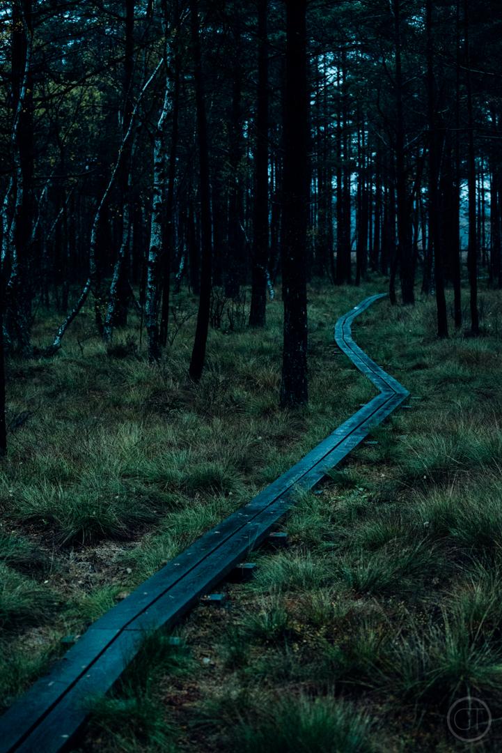 GUSTAV-THUESEN-adventure-denmark-photographer-nature-landscape-KØBENHAVN-FOTOGRAF-lifestyle-3.jpg