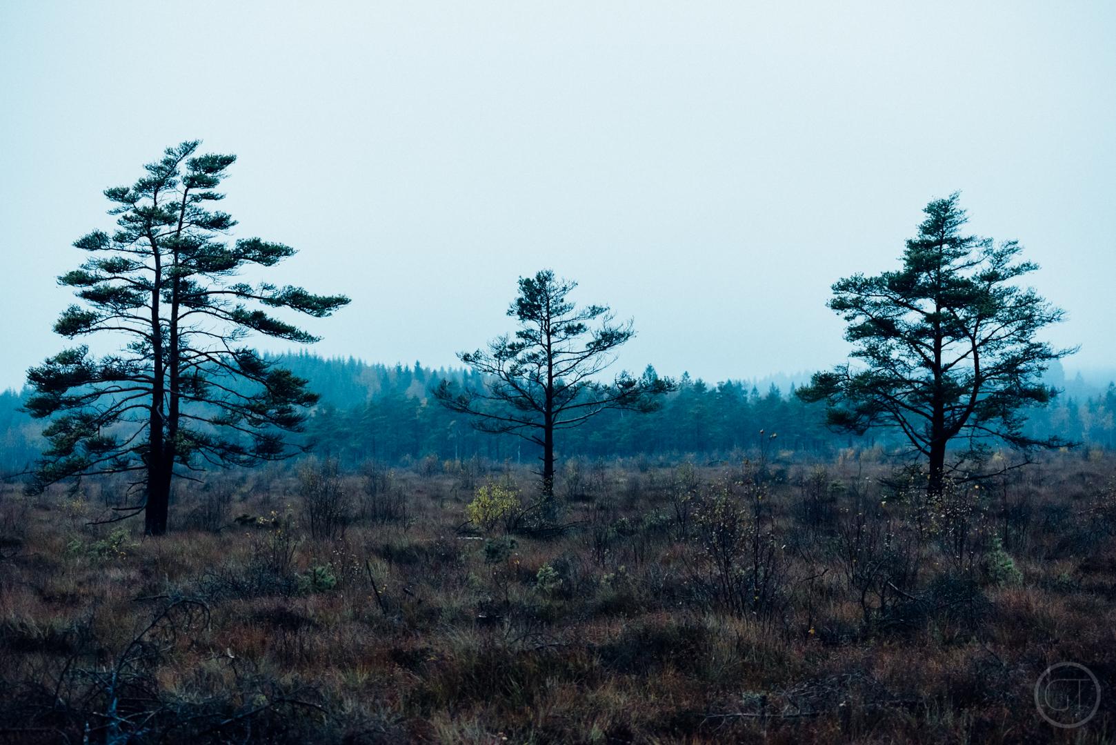 GUSTAV-THUESEN-adventure-denmark-photographer-nature-landscape-KØBENHAVN-FOTOGRAF-lifestyle-4.jpg