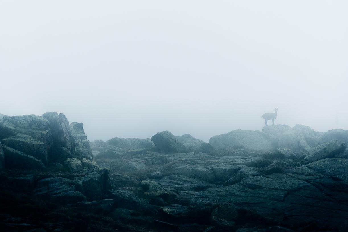 GUSTAV-THUESEN-PHOTOGRAPHER-VIDEO-ADVENTURE-OUTDOOR-LIFESTYLE-FINE-ART-41.jpg