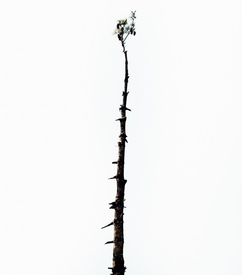 GUSTAV-THUESEN-PHOTOGRAPHER-VIDEO-ADVENTURE-OUTDOOR-LIFESTYLE-FINE-ART-64.jpg
