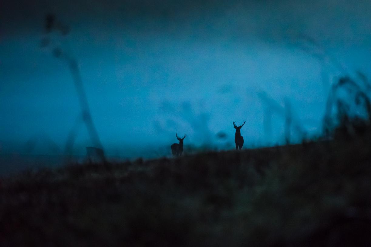 GUSTAV-THUESEN-PHOTOGRAPHER-VIDEO-ADVENTURE-OUTDOOR-LIFESTYLE-FINE-ART-22.jpg