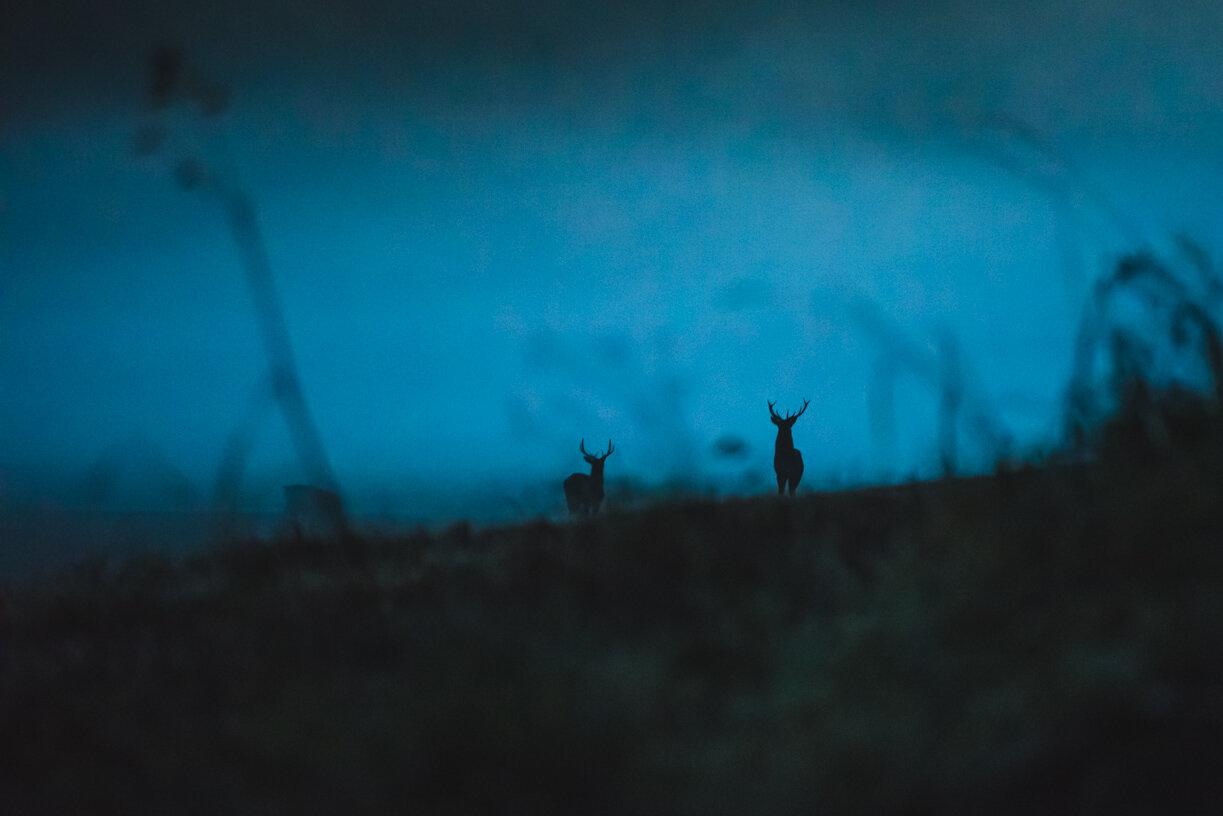 GUSTAV-THUESEN-PHOTOGRAPHER-OUTDOOR-LIFESTYLE-NATURE-TRAVEL-VIDEO-4.jpg