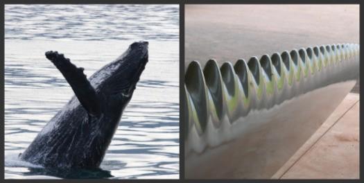 whale_collage_0.jpg