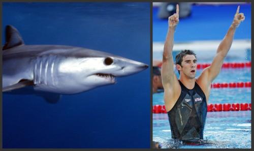 shark_collage_1.jpg