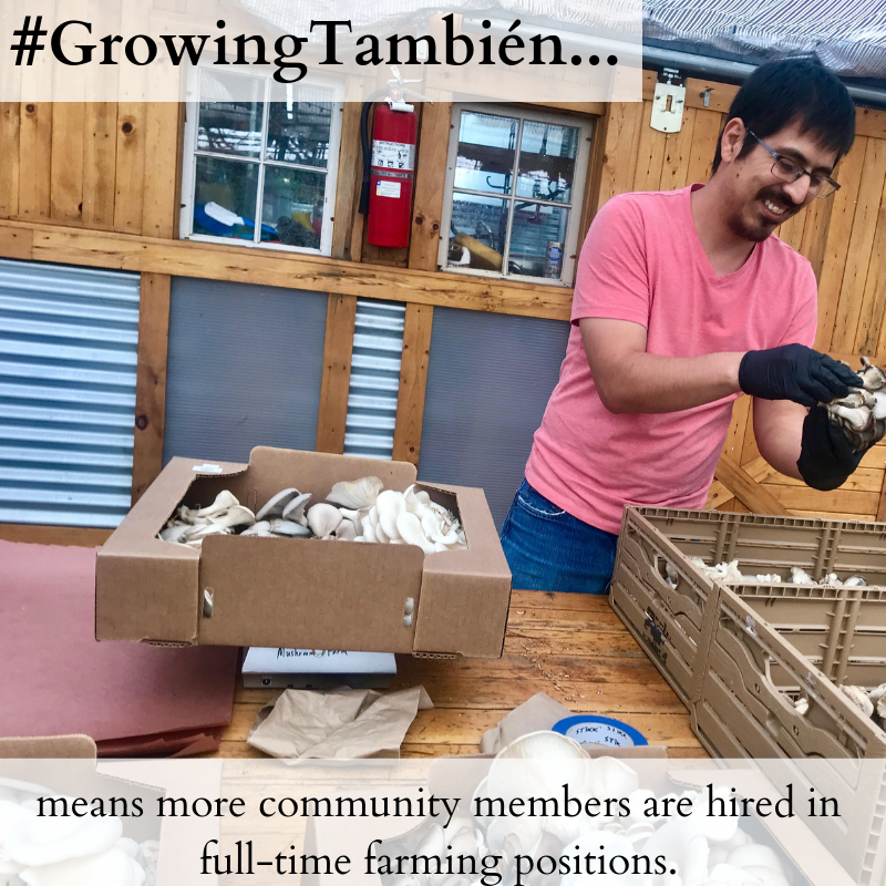 Irving, who lives in Montbello but has roots in Globeville and Elyria-Swansea, was hired as the first Farm Apprentice in 2018. The Farm Apprenticeship is a year long paid position for someone to learn the day-to-day operations of The GrowHaus hydroponic, aquaponic, and mushroom farm, while developing their leadership skills. Irving jumped right in, showcasing his incredible work ethic, unique problem solving ability, and excellent sense of humor. Just last month, we hired on Irving to a permanent role, and are hiring currently for a new apprentice.