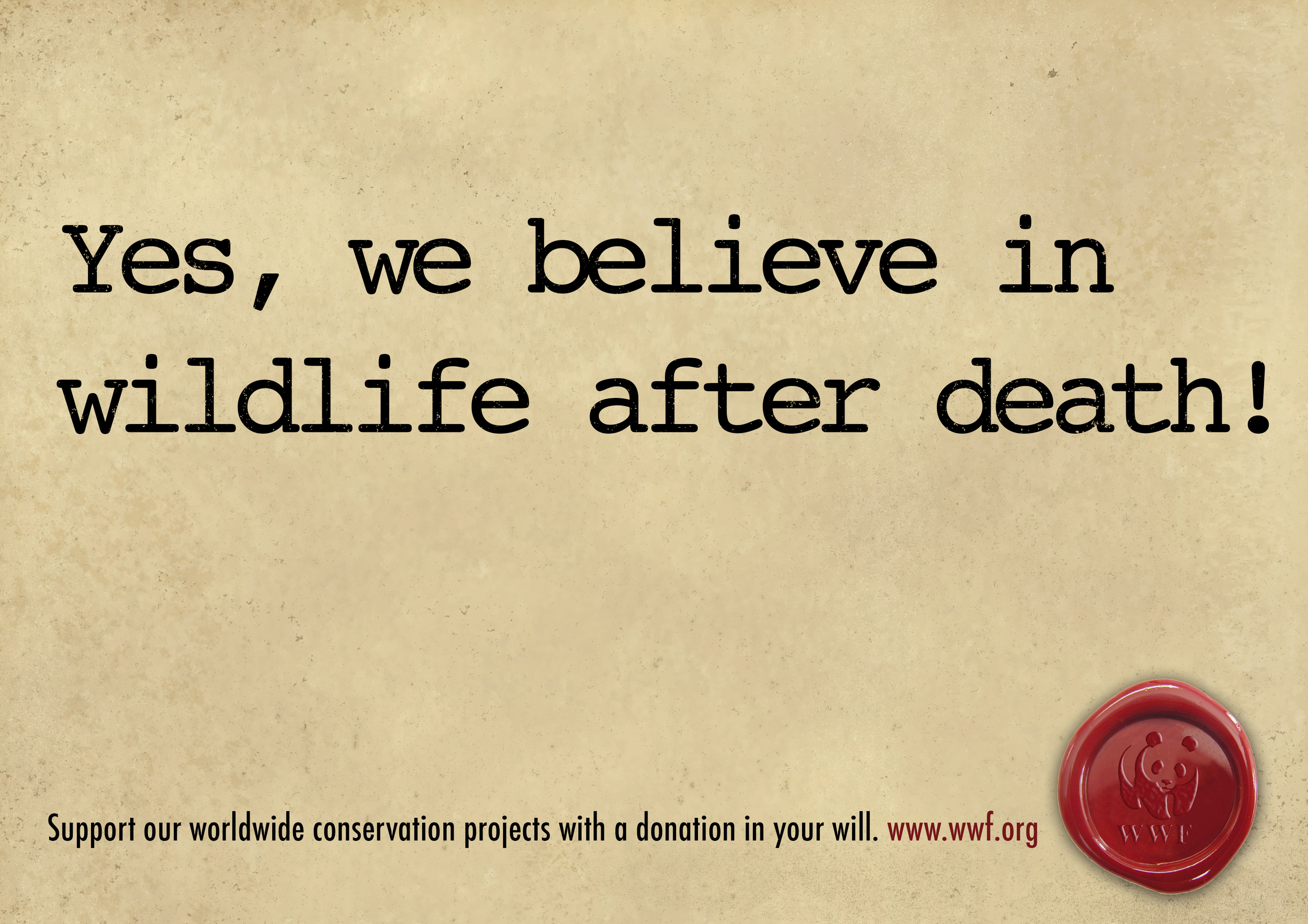 WWF_will_2.jpg