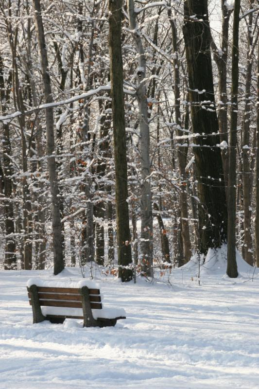 """Nothing says """"joy"""" like this lonely picture of a snow-covered bench."""