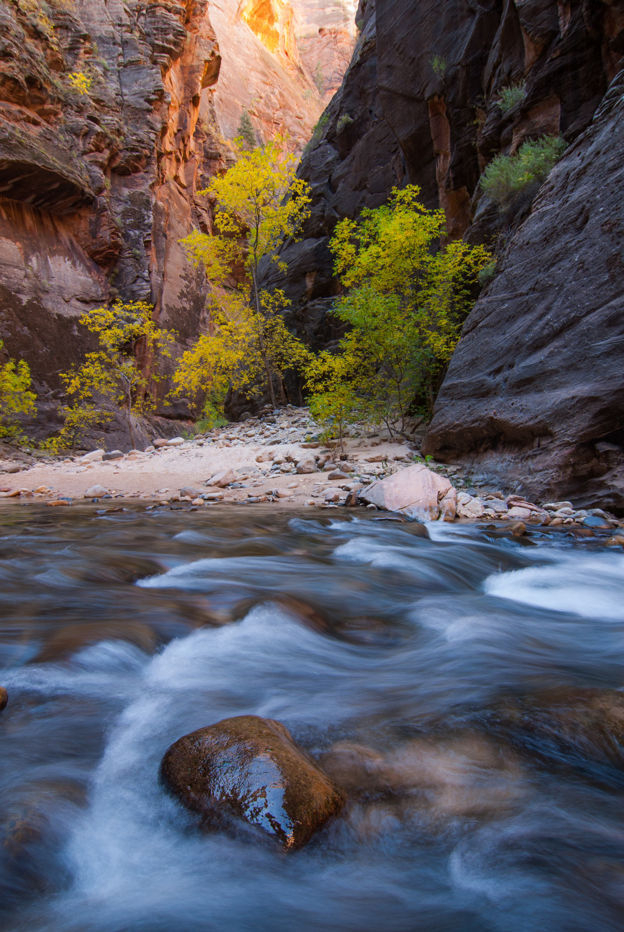 Zion Narrows with Reflected Light and Fall Foliage