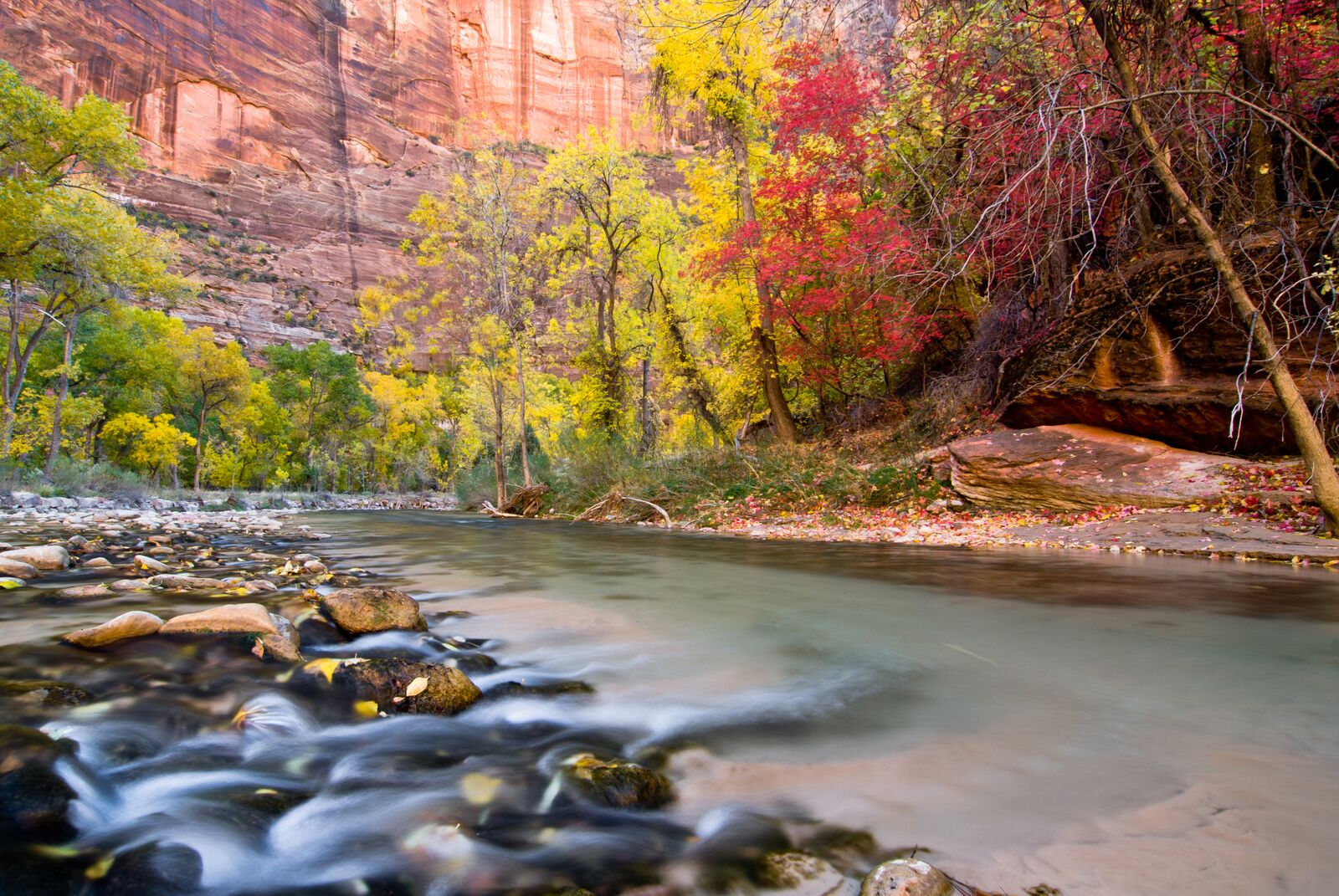 Zion's Narrows with Flowing Water and Changing Leaves during Fall