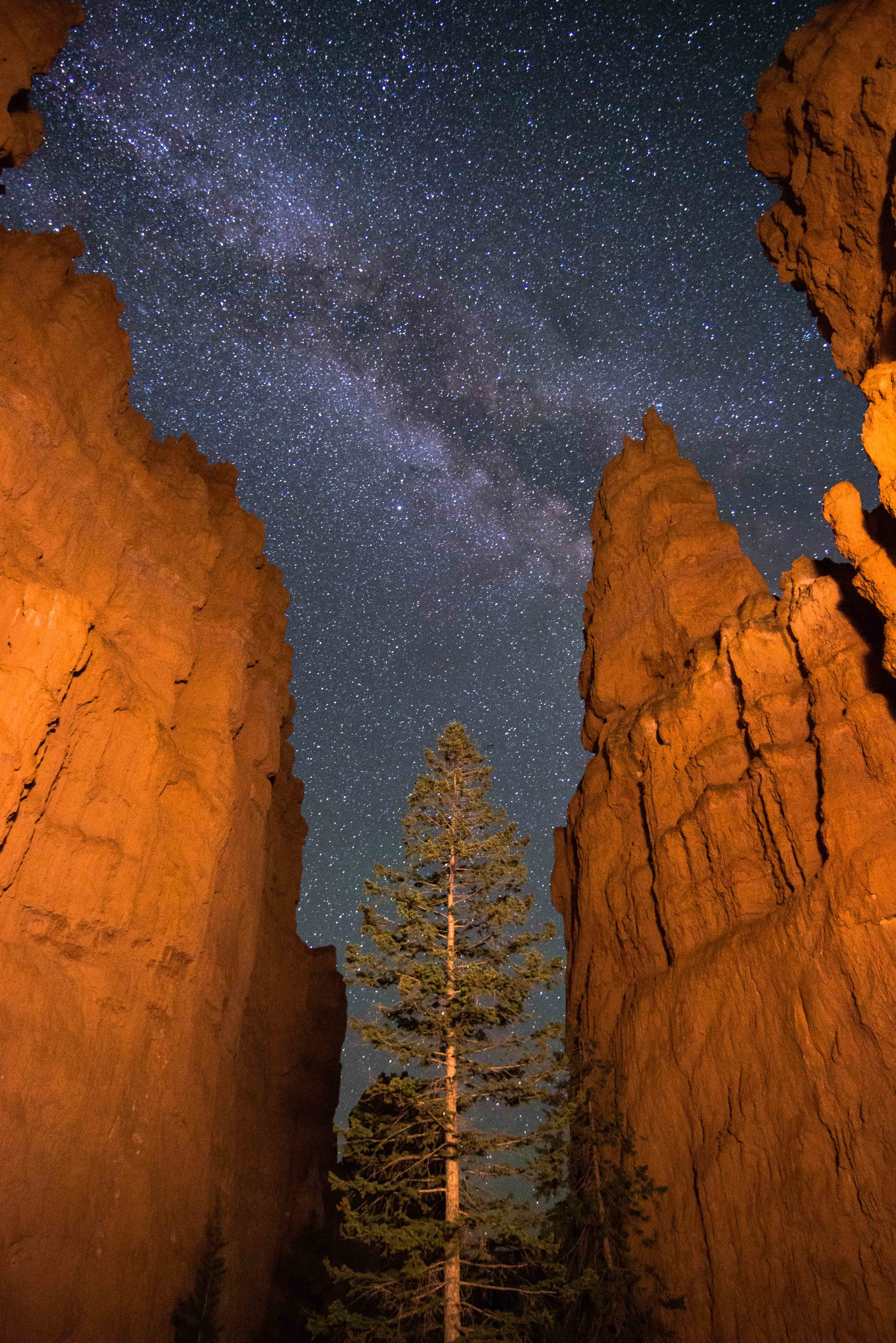 Hoodoos in Bryce Canyon with Painted Light, Tree, and Milky Way