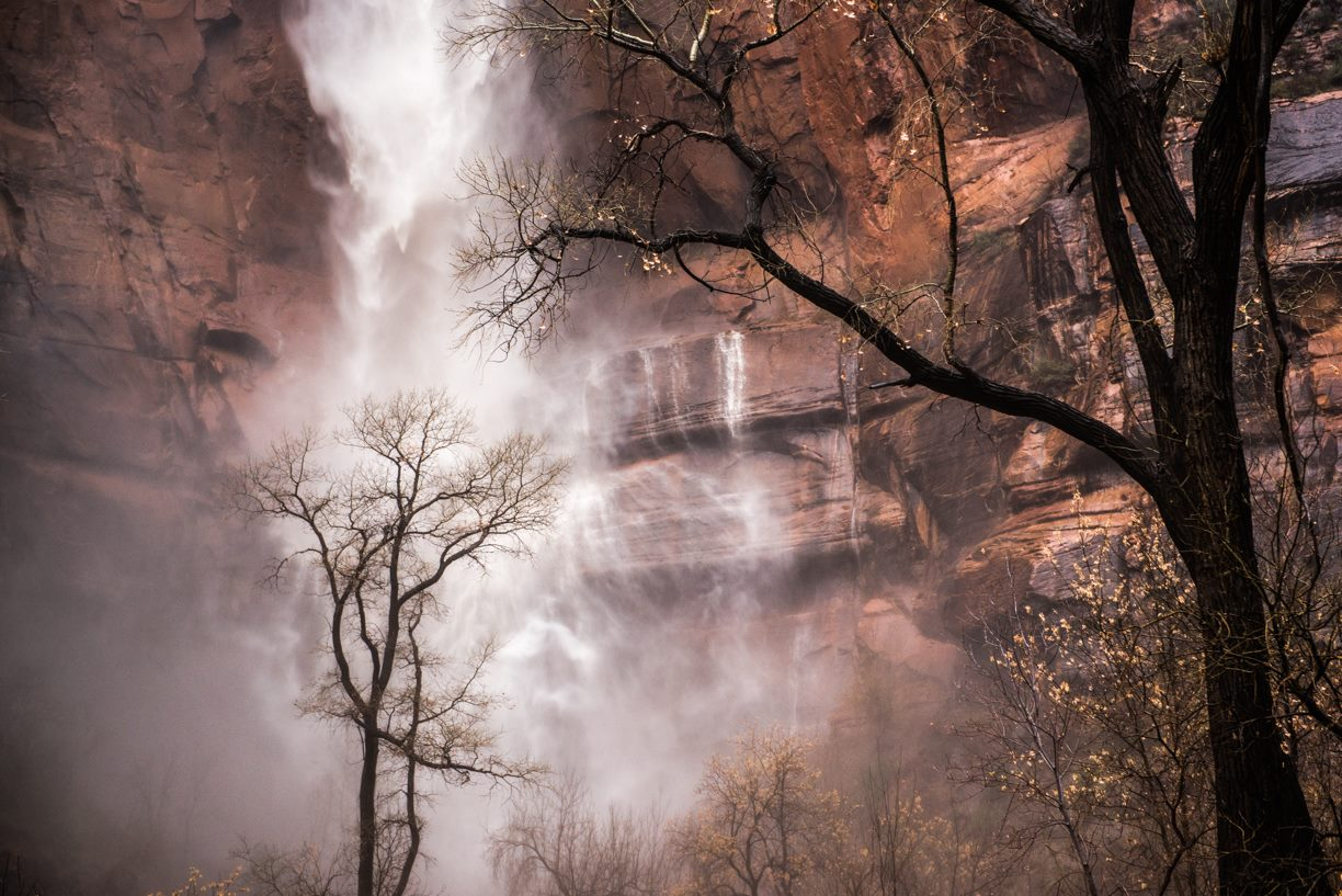 Zion Waterfall with Tree during Autumn