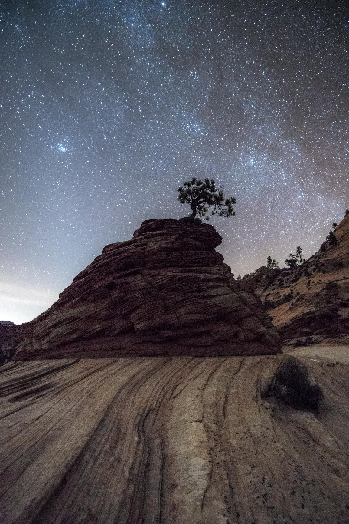 Zion Bonsai Tree with Milky Way