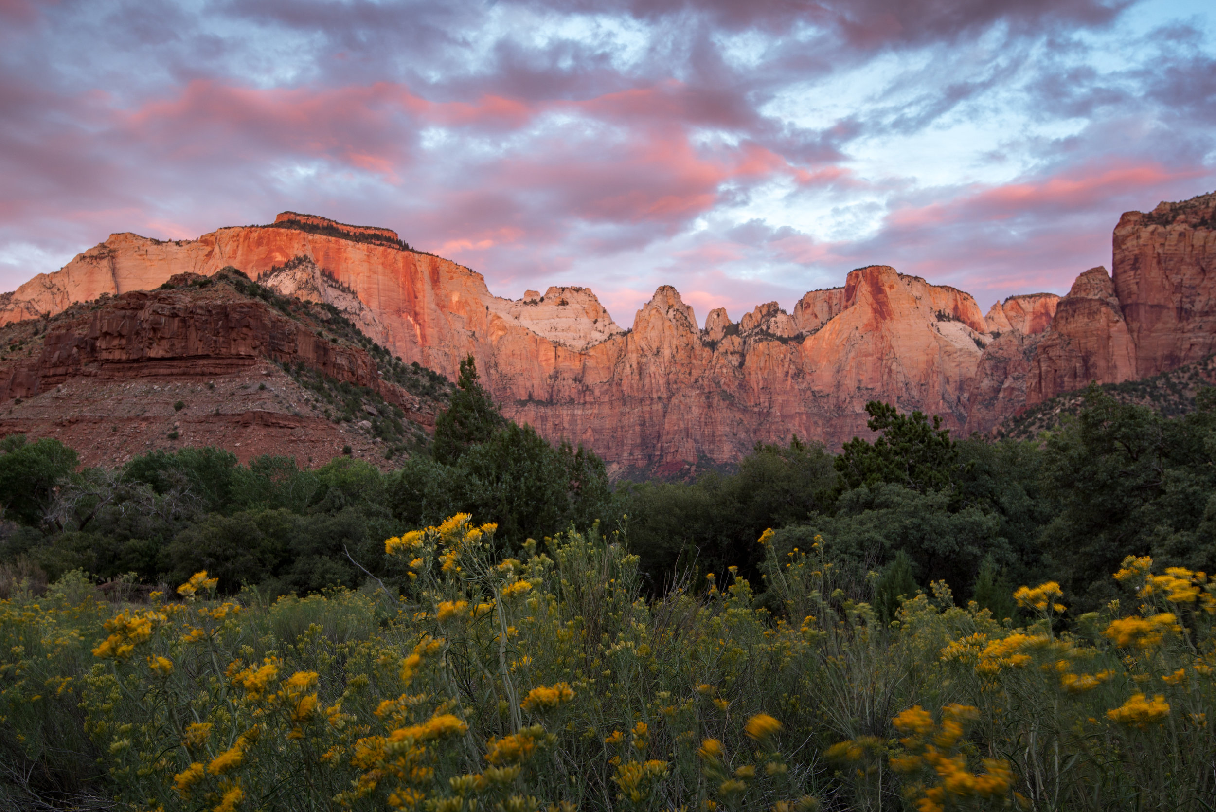 Zion West Temple at Sunrise with Wildflowers