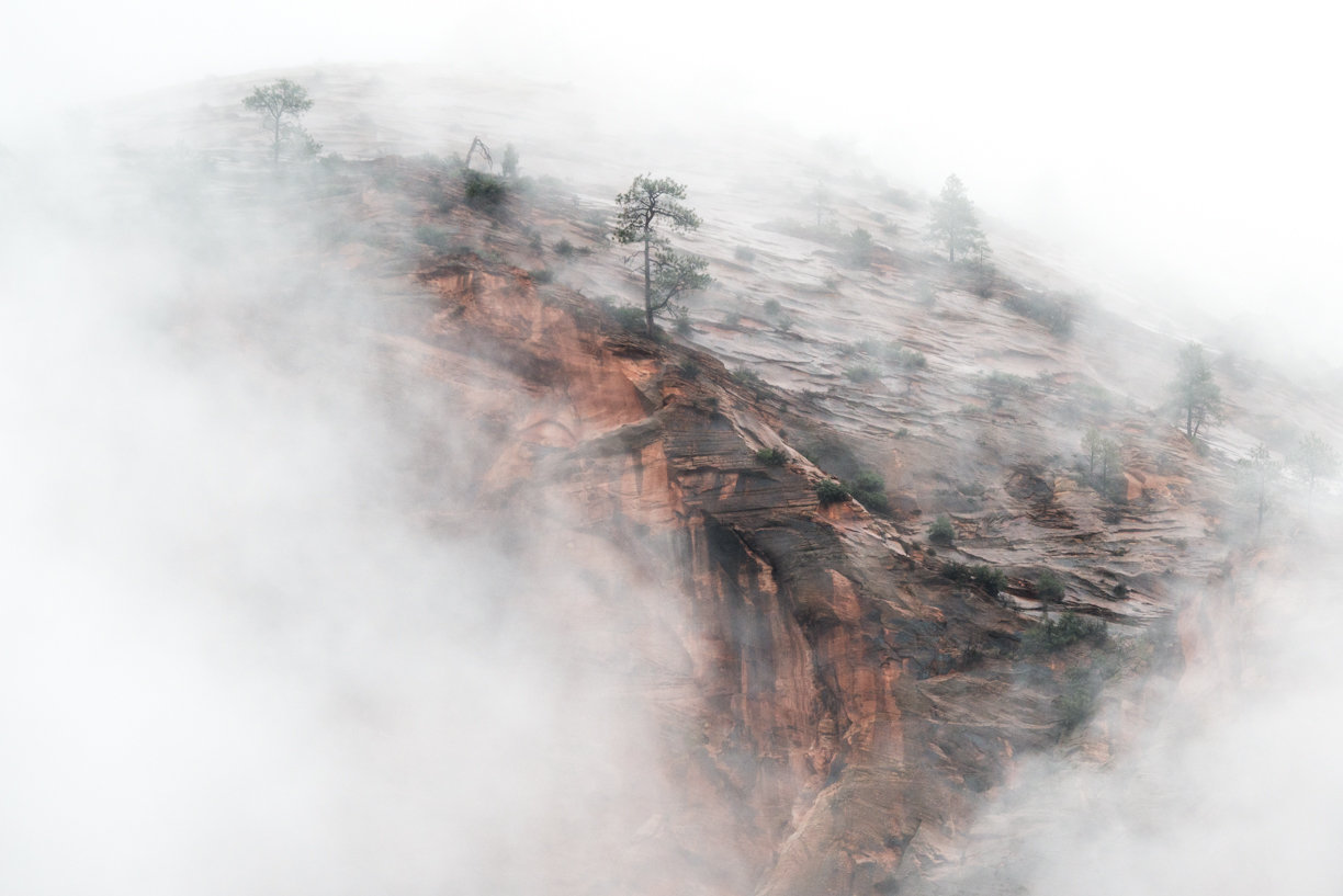 Fog Surrounding Mountain and Trees in Zion