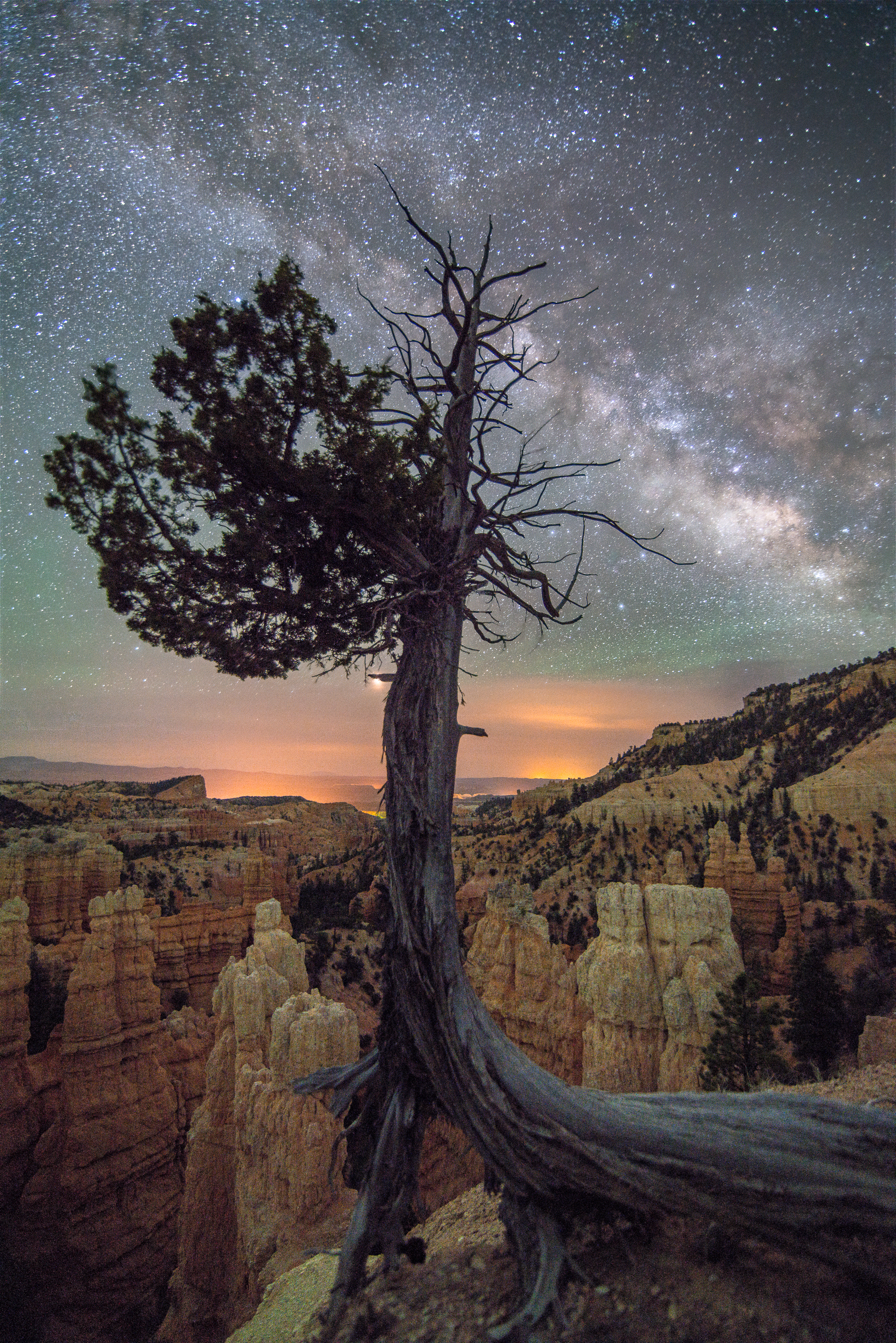 Tree and Hoodoos in Bryce Canyon National Park at Night