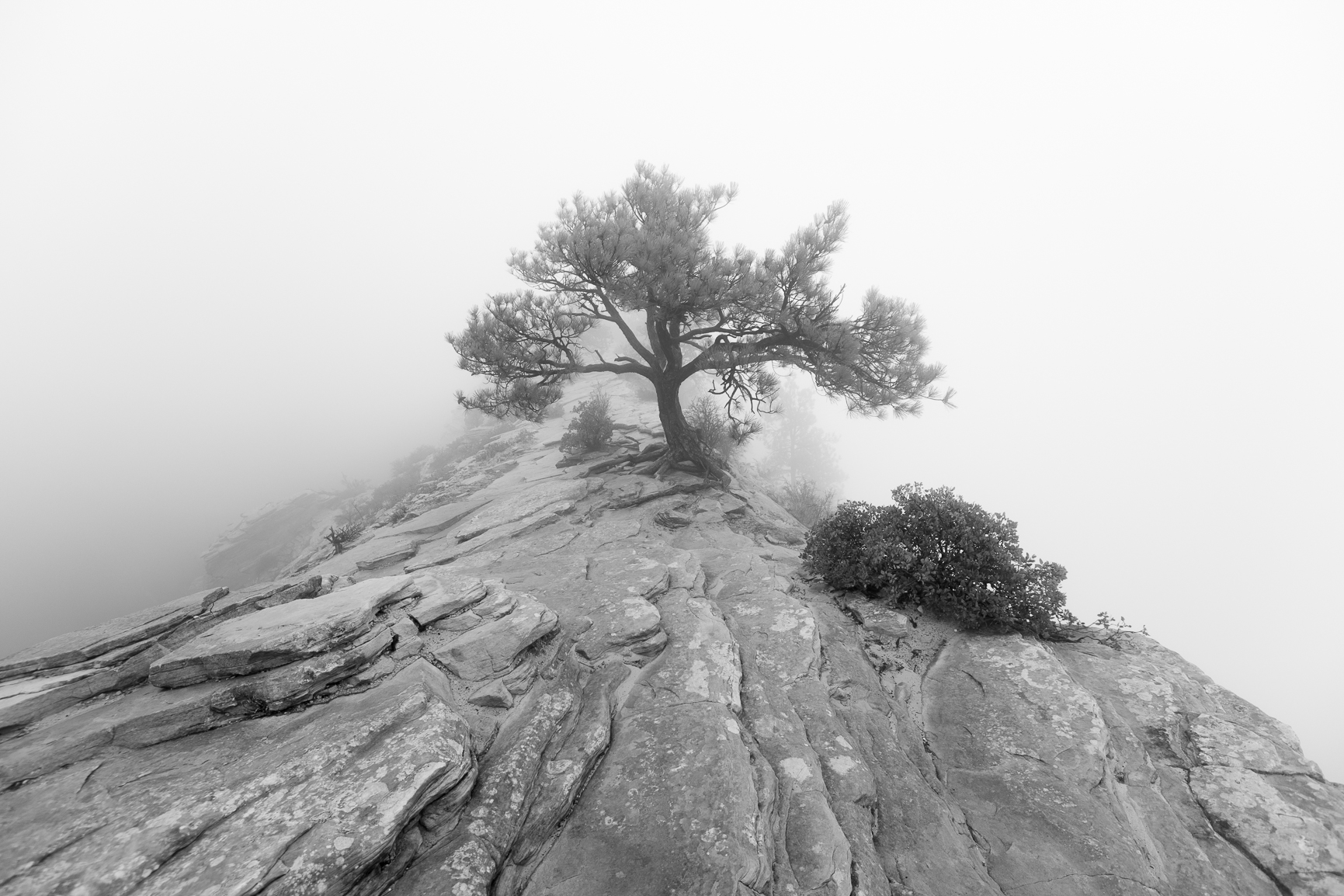Tree in Zion Surrounded by Fog