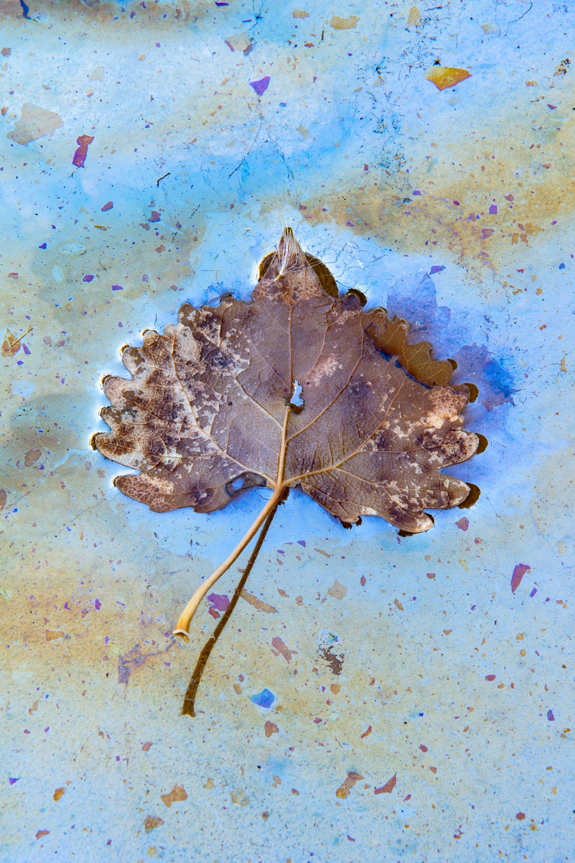 Detailed Leaf in Fall