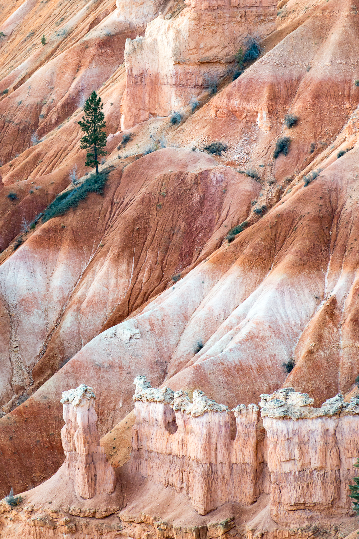 Detailed Photo of Bryce National Park Hoodoos and Tree