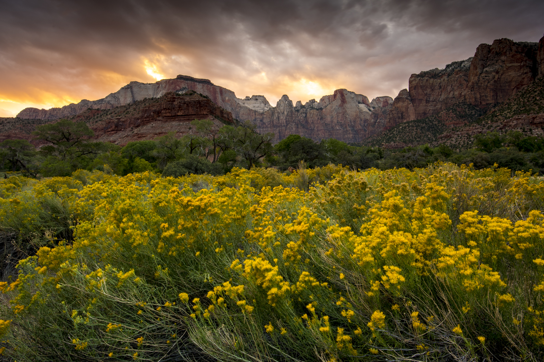 Zion Sunset of Wildflowers and West Temple