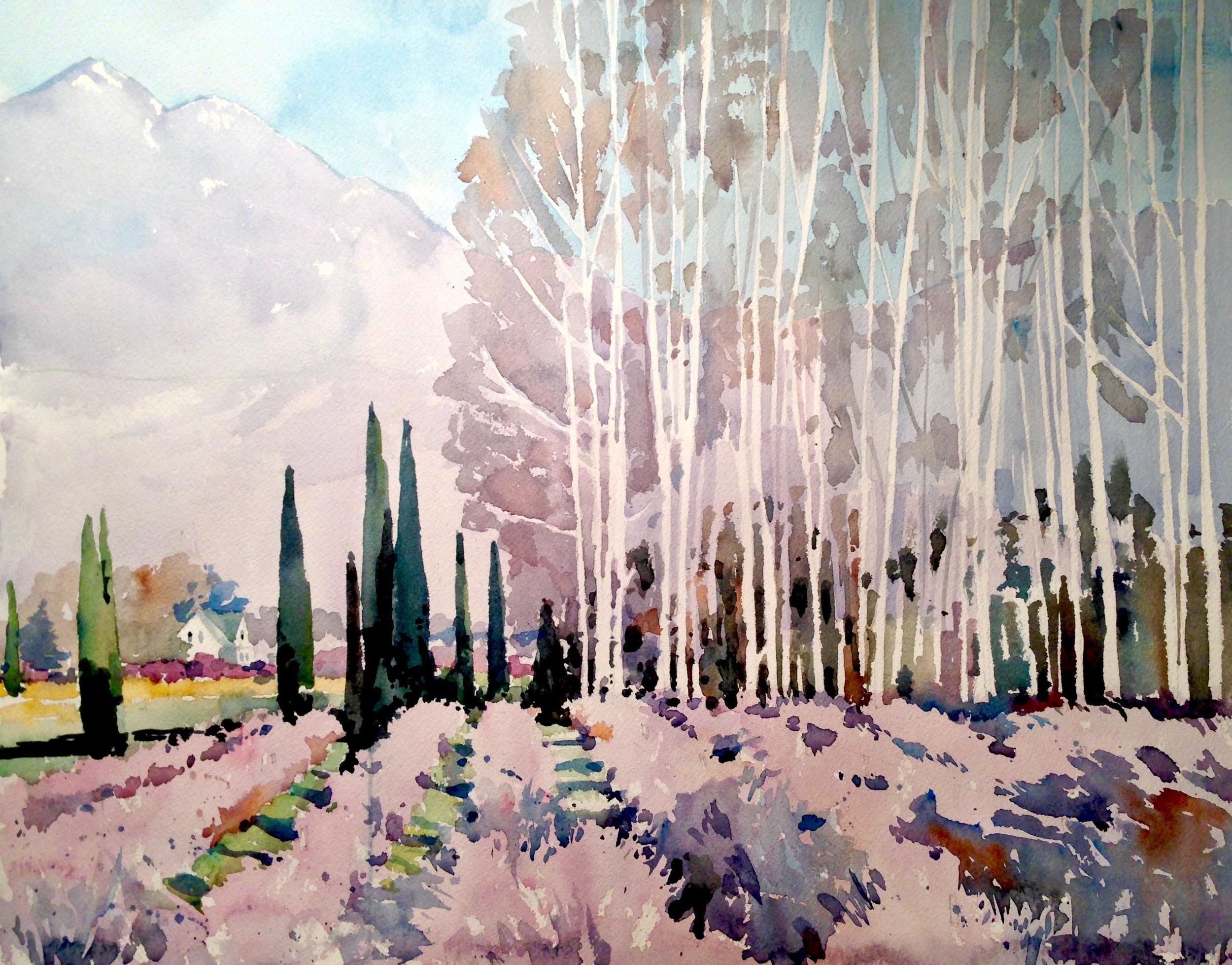 """""""Birch Trees in Early Winter"""""""