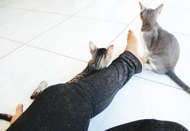leggings-cats__medium_4x3.jpg