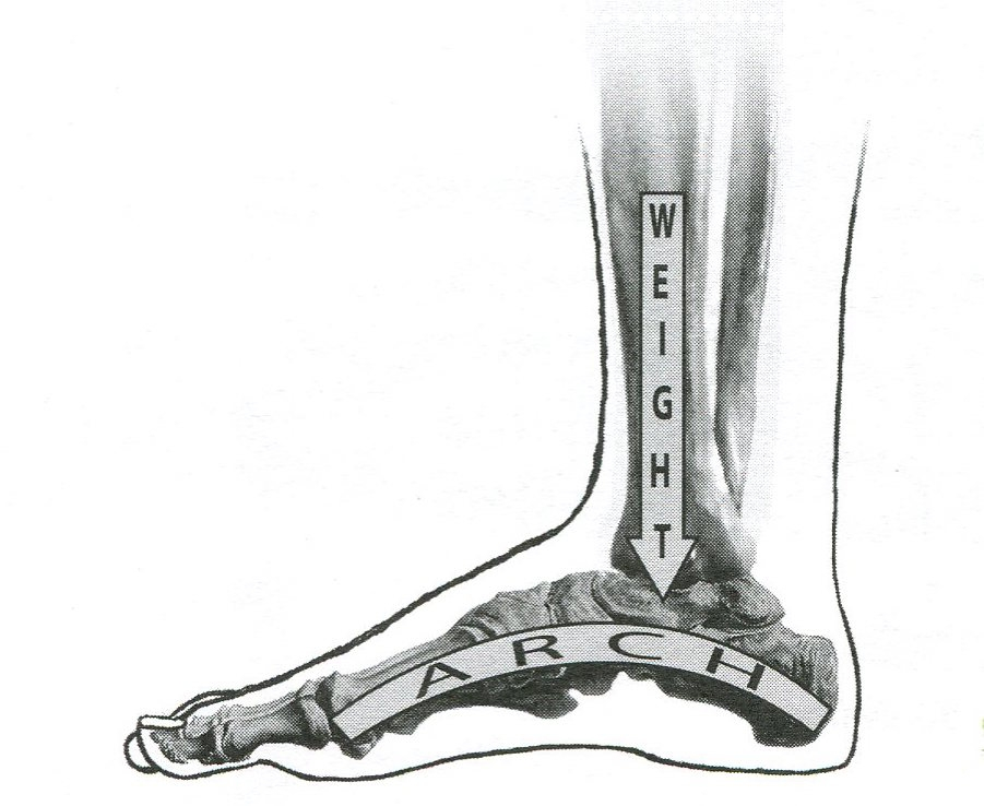 """It is helpful to understand the architecture of the lower leg and foot in balancing on a wobble board. Notice that our weight goes down through the  back half of the foot in simple standing balance. If you center your foot on the wobble board, your weight will go through the back half of the wobble board, not the center. Image from Jennifer Johnson's book on body mapping, """"What Every Violinist Needs to Know About the Body."""""""