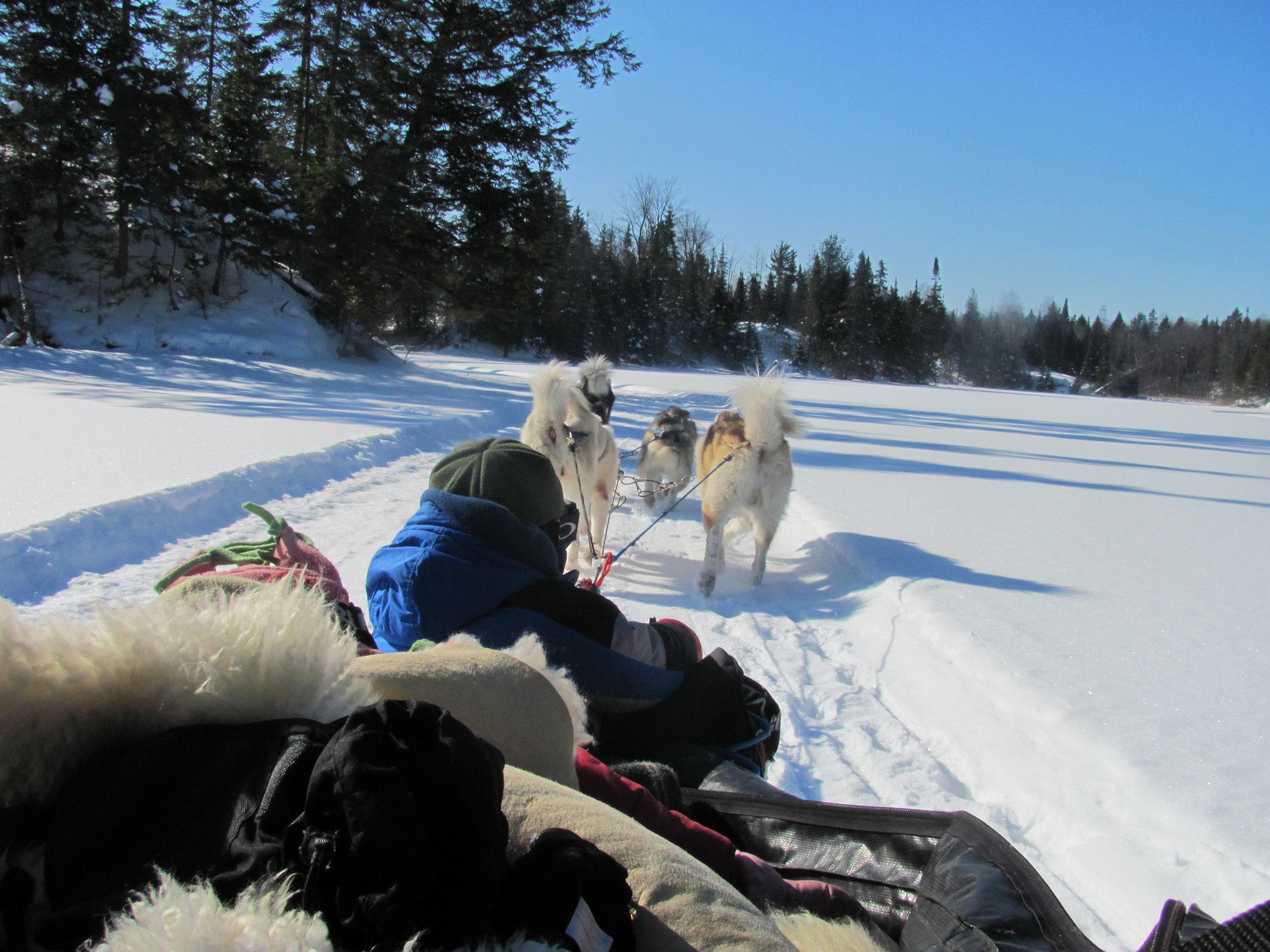 Dogsledding -
