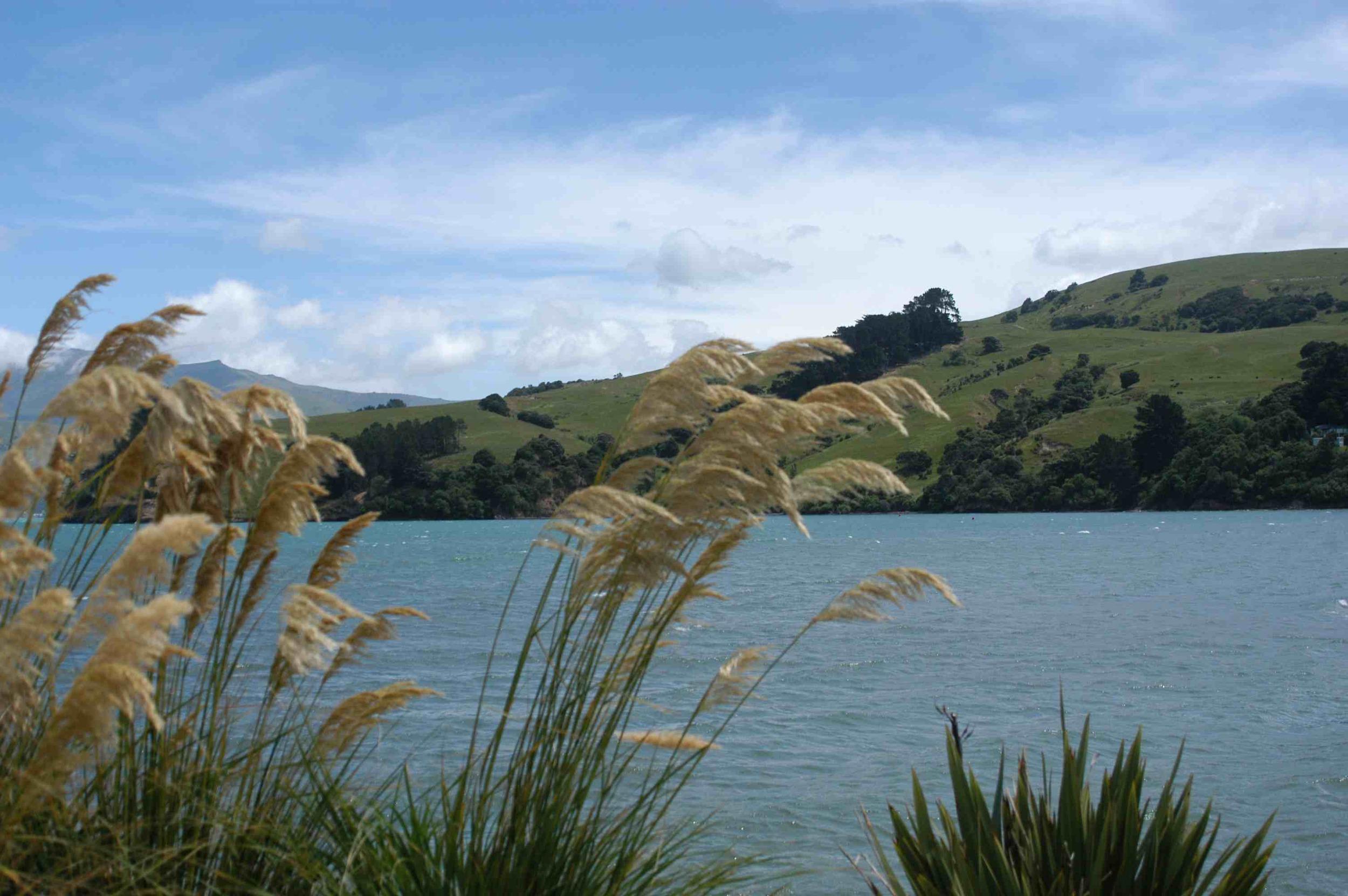 Nature lovers paradise, new zealand