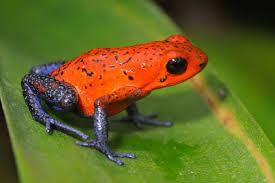 bluejeanfrog.jpg