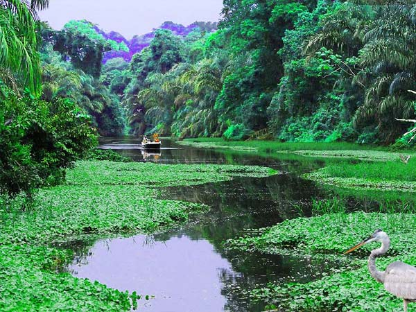 Costa-Rica-Tortuguero-National-Park-600.jpg