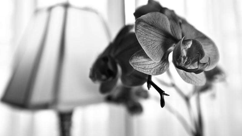 Study of an Orchid #1