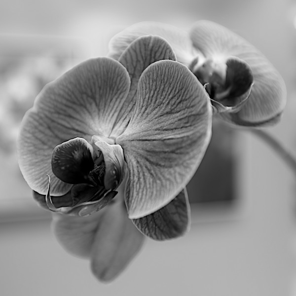 Bunch of Orchids #3