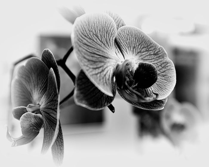 Bunch of Orchids #5