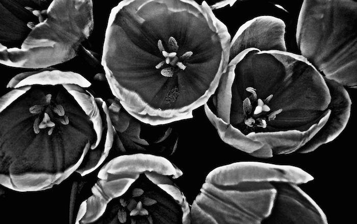 Bunch of Tulips #1