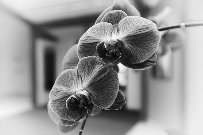 Bunch of Orchids #7