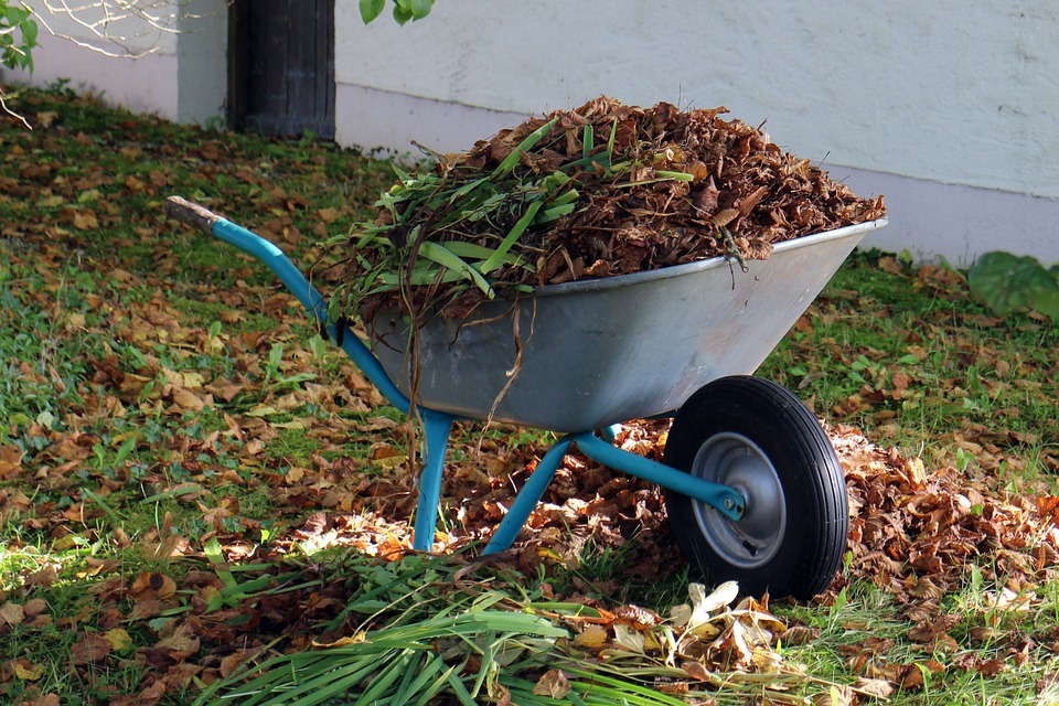 Fall Wheelbarrow full of leaves.jpg